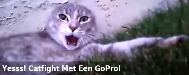 Yesss! Catfight Met Een GoPro!