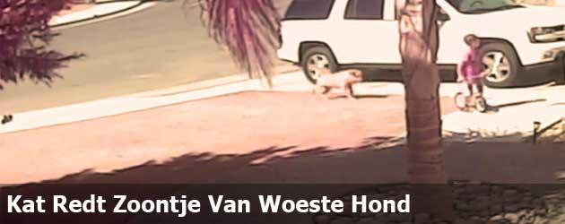 Kat Redt Zoontje Van Woeste Hond