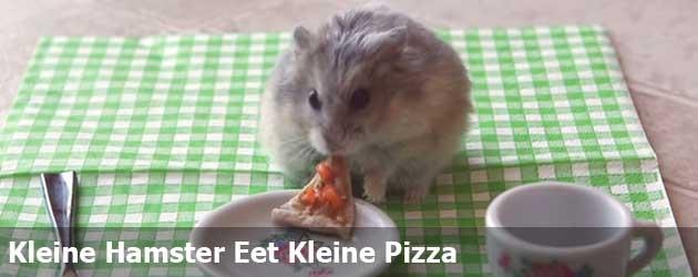 Kleine Hamster Eet Kleine Pizza
