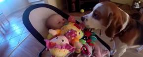 Hond Jat Van Baby