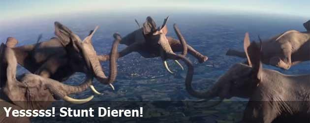 Yesssss! Stunt Dieren!