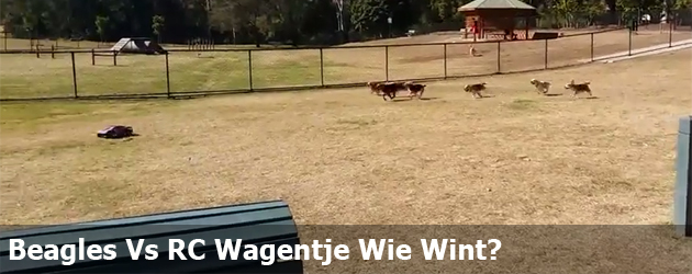 Beagles Vs RC Wagentje Wie Wint?