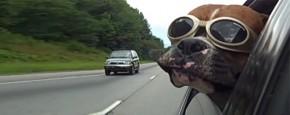 De Ultieme Honden In Auto's Compilatie