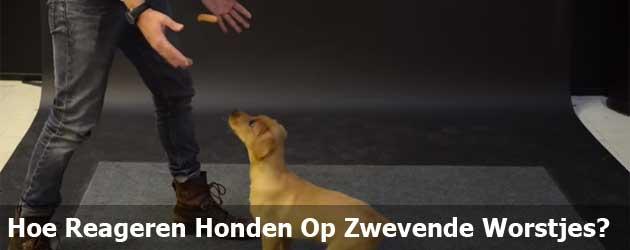 Hoe Reageren Honden Op Zwevende Worstjes?
