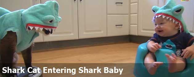 Shark Cat Entering Shark Baby