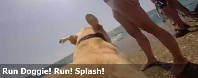 Run Doggie! Run! Splash!