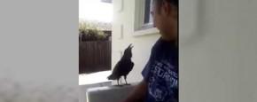 Brutale Vogel Geeft Geen Fuck