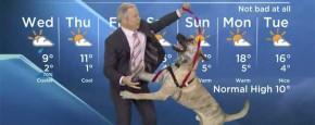 Nieuws Blooper: Weerman Versus Hond