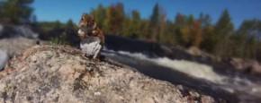 Dappere Redding Van Ondankbare Eekhoorn
