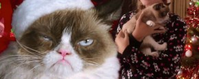 Trailer: Grumpy Cat The Movie