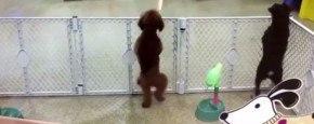 Deze Hond Danst Beter Dan Jij