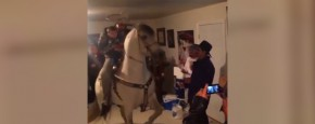 Er Staat Een Paard In De Gang
