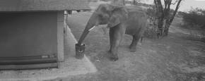 Handig! Een Olifant Die Je Rommel Opruimt