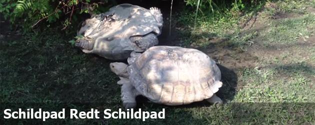 Schildpad Redt Schildpad