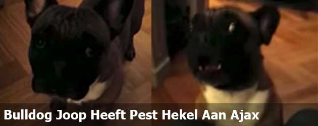 Bulldog Joop Heeft Een Pest Hekel Aan Ajax