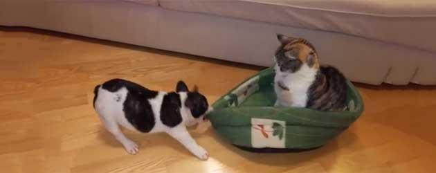 Hoe De Puppy Bulldog Zijn Mandje Terug Kreeg
