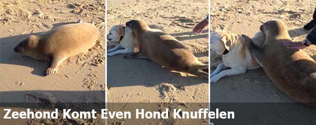 Zeehond Komt Even Hond Knuffelen
