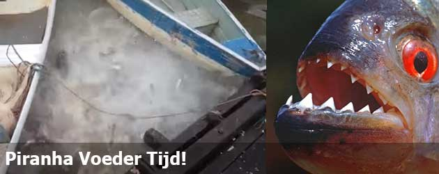 Piranha Voeder Tijd!