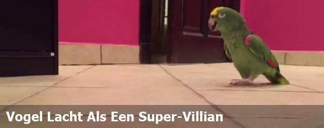 Vogel Lacht Als Een Super-Villian