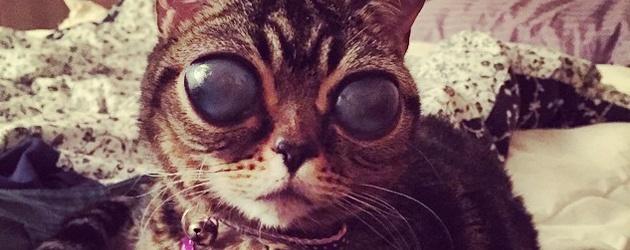 PrutsFM.nl Ontmoet Matilda. Een hele gewone kat, maar heeft wel enorme alien ogen. Dit komt door een genetisch bepaalde oogstoornis. Matilda heeft inmiddels 40.000 instagram volgers en het regent likes.