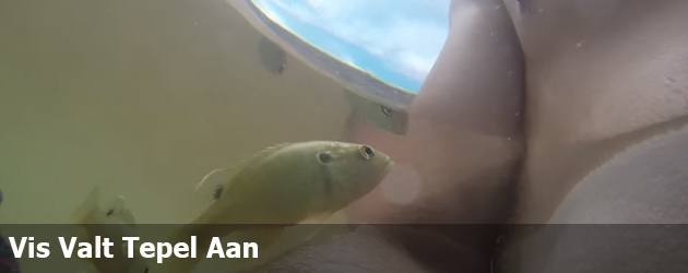 Vis Valt Tepel Aan