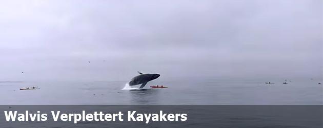 Walvis Verplettert Kayakers