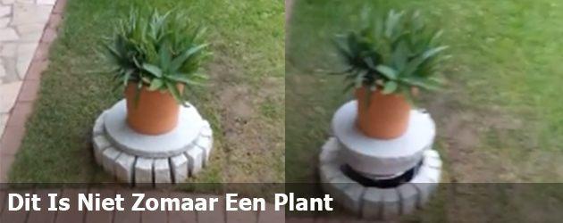 Dit Is Niet Zomaar Een Plant