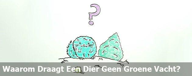 Waarom Draagt Een Dier Geen Groene Vacht?
