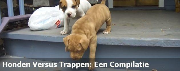 Honden Versus Trappen: Een Compilatie
