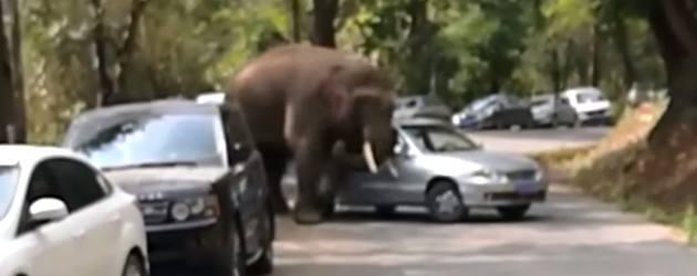 Olifant Komt Even Een Auto Knuffelen