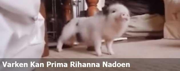 Varken Kan Prima Rihanna Nadoen