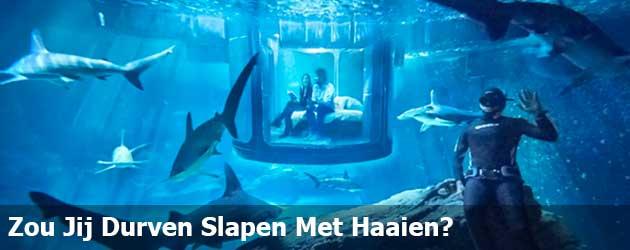 Zou Jij Durven Slapen Met Haaien?