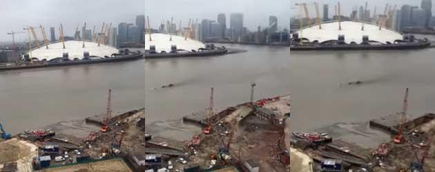 Wat Zwemt Daar Nou Voor Groot Monster In De Thames?