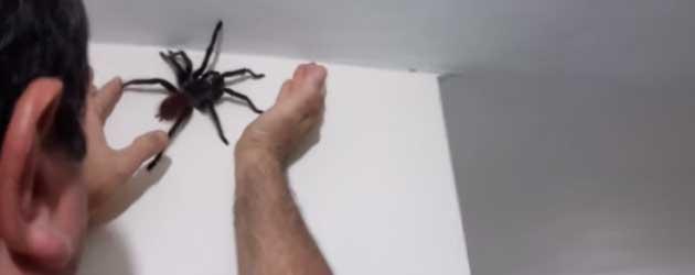 Even Een Spinnetje Vangen In Huis