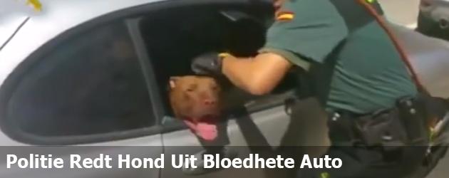Politie Redt Hond Uit Bloedhete Auto