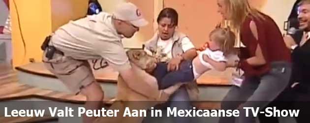 Leeuw Valt Peuter Aan In Mexicaanse TV-Show