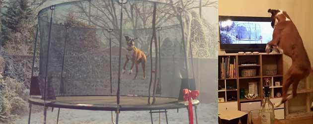 Boxer Reageert Op De Kerst Commercial