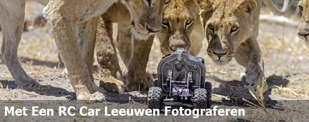 Met Een RC Car Leeuwen Fotograferen