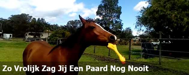 Zo Vrolijk Zag Jij Een Paard Nog Nooit