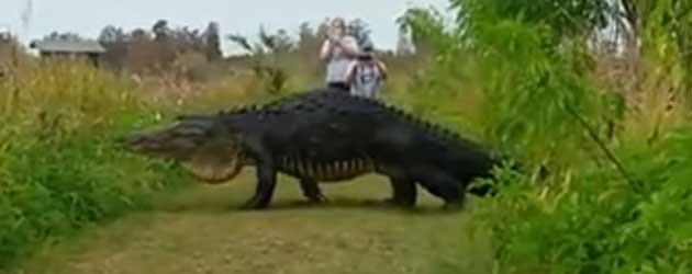 Het Bewijs Dat Dinosaurussen Bestaan