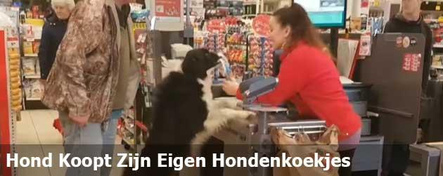 PrutsFM.nl Slim beestje, weet precies wat hij wil en heeft nog sjans bij de kassa in de supermarkt ook.