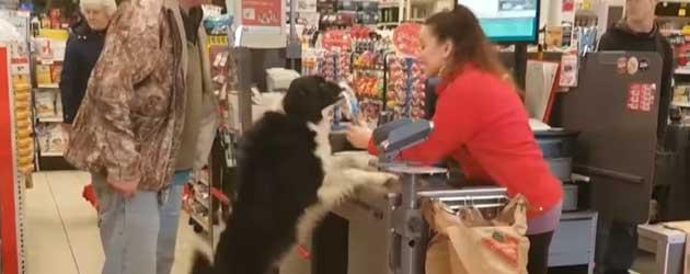 Hond Koopt Zijn Eigen Hondenkoekjes