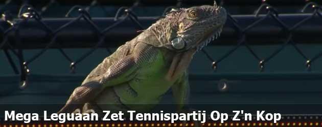 Mega Leguaan Zet Tennispartij Op Z'n Kop