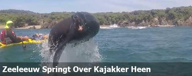 Zeeleeuw Springt Over Kajakker Heen