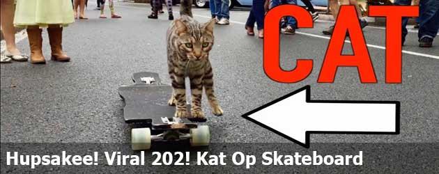 Hupsakee! Viral 202! Een Kat Op Een Skateboard