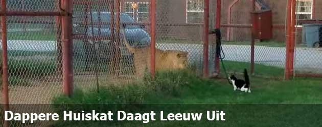 Dappere Huispoes Daagt Leeuw Uit
