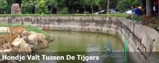 Dat moment dat je hondje in het tijgerverblijf valtverblijf valt