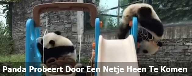 Panda Baby probeert zichzelf door een basket heen te duwen