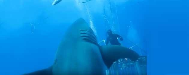 Dit Is De Grootste Haai Ooit Gefilmd