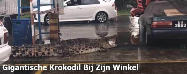 Gigantische Krokodil Bij Zijn Winkel